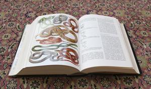 Enzyklopedie des Tierreiches (1971)