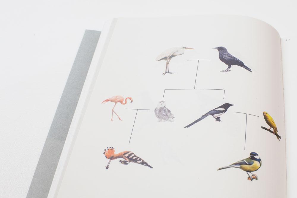 Ornithology07